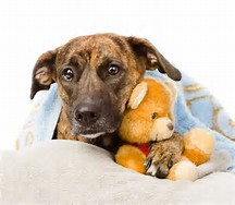 8 Early Warning Signs of Canine Cancer that Dog Owners Can't Ignore