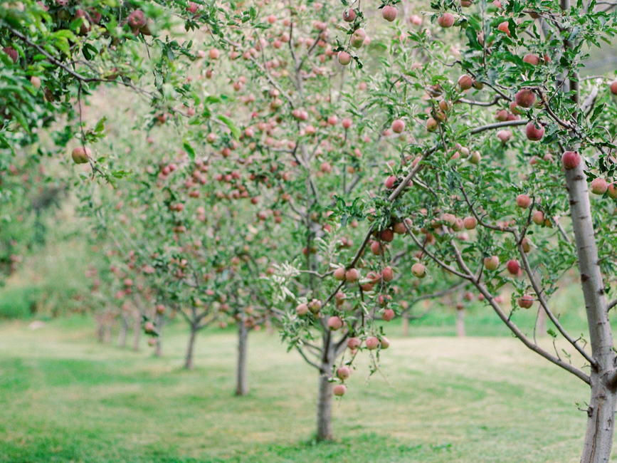 Opulent Orchard Fall Wedding Inspiration