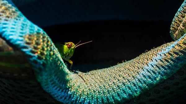 Grasshopper, Amarillo Texas
