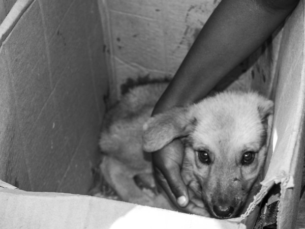 Puppy in a box, Belize