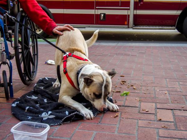 Street dog, San Francisco