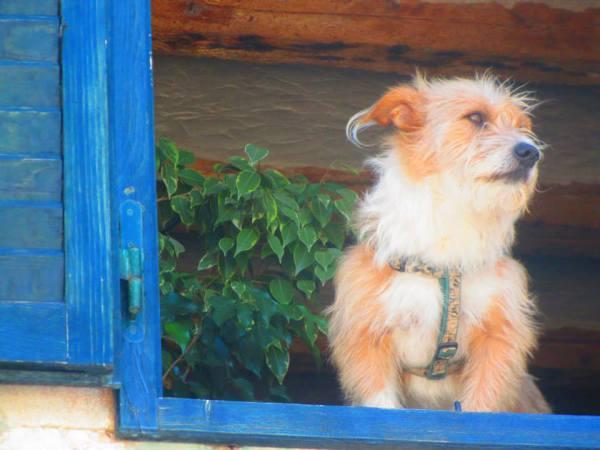 Street Dog, Hvar Croatia