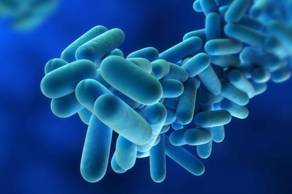 Legionella Services & Risk Assessment