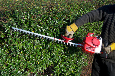 gardener hedge cutting with a hedge cutter
