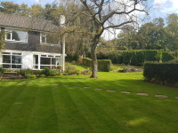 lawn lawn been cut mowing mow with willow tree and house hedges lonicera oak-gardens.co.uk