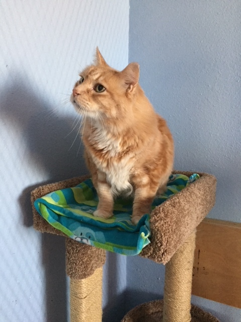 FLUFFY - 5 YEAR OLD NEUTERED MALE