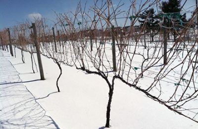 Update: Polar Vortex & NY Wine