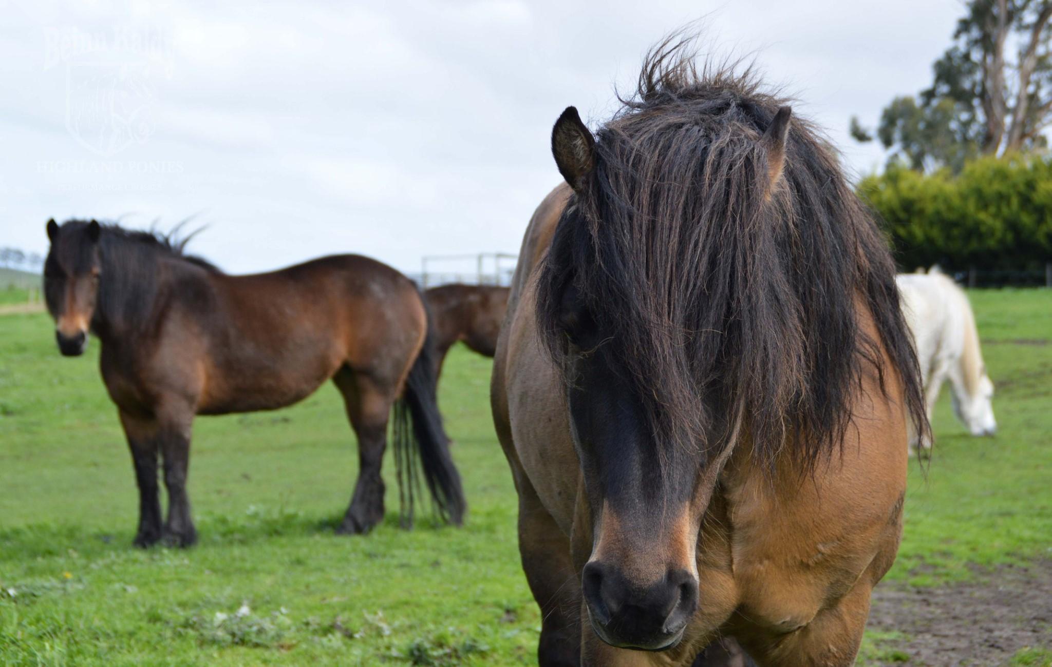 Tarabrae Mallee and his 2019 season mares