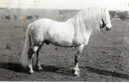 The 60's Offspring of Glenearn Brigadier and their influence on the Australian Pony breed.