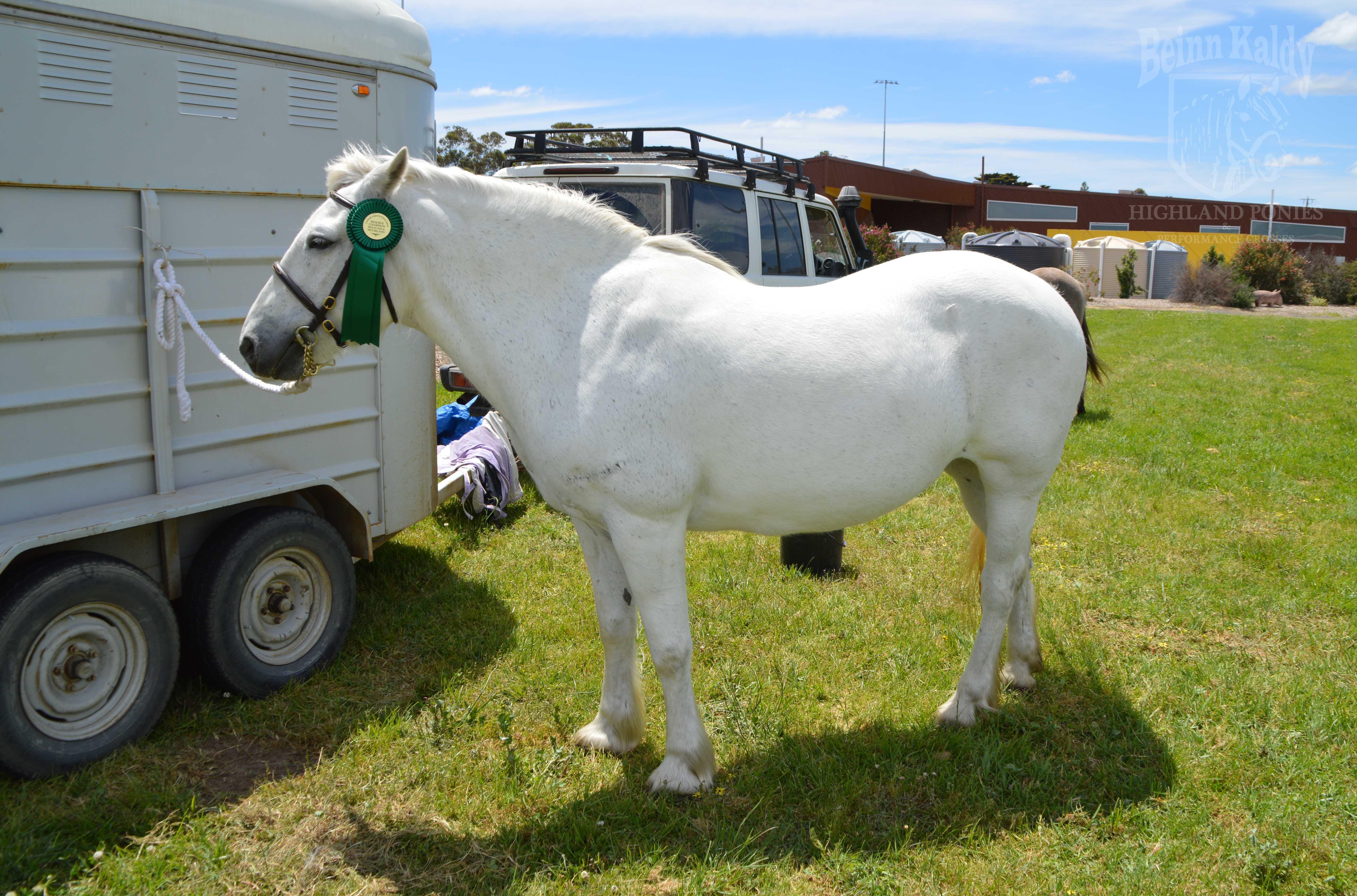 beinn kaldy, highland pony mare, senlac