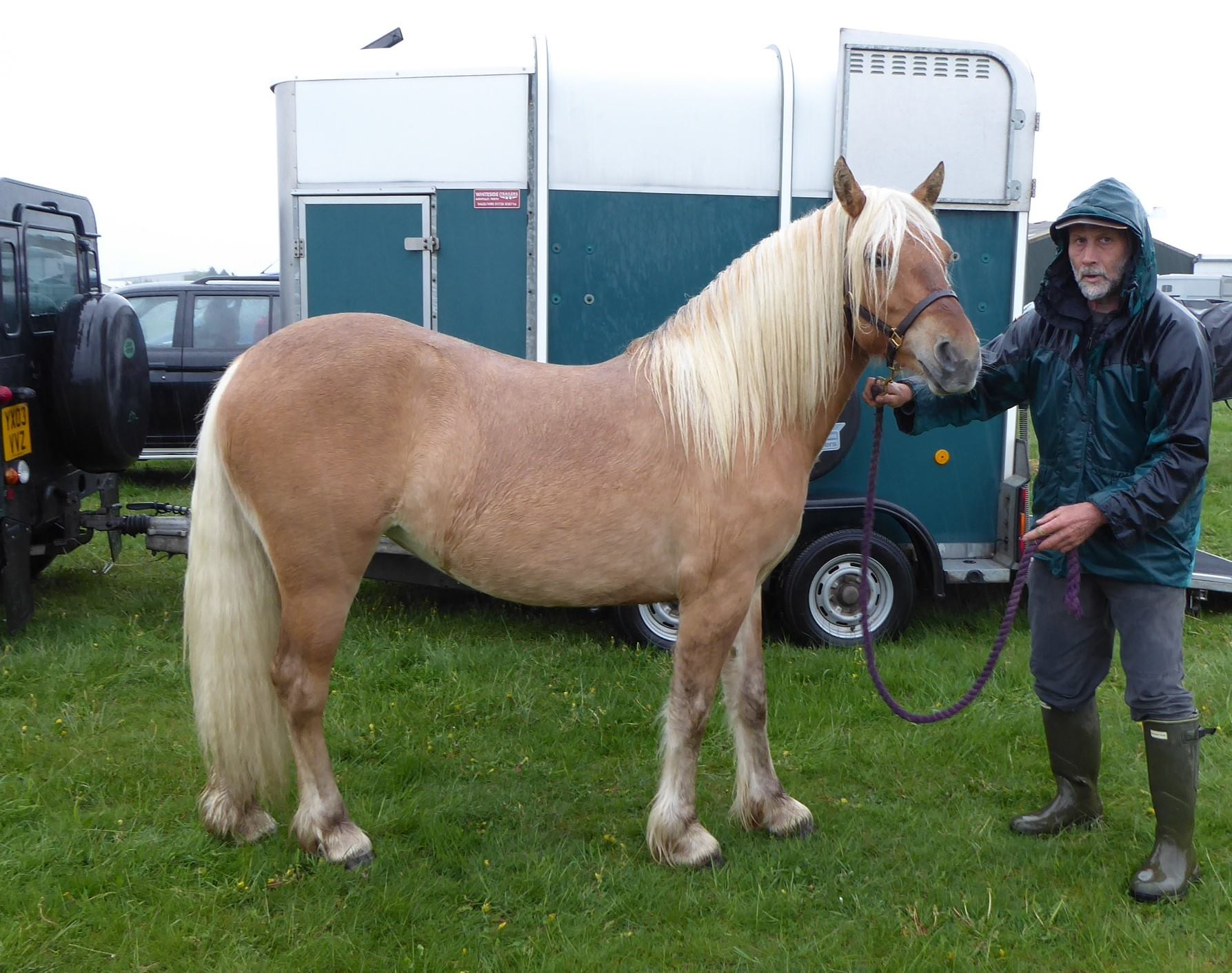 Luiseach of Liosmor kindly supplied by Wendy Sanders of Ruwenzori Highland Pony stud in the UK