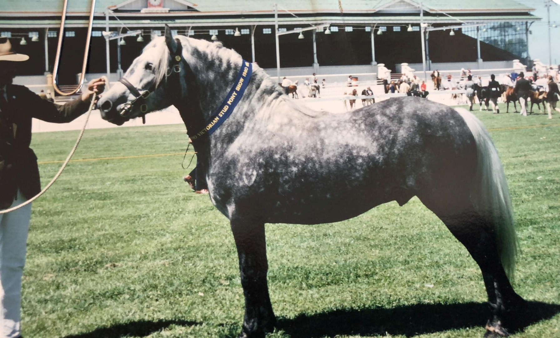 The 1970's and what they meant to the Highland Pony breed in Australia.