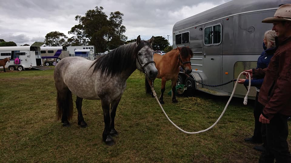Tarabrae Lechenaultia and Senlac Sky Walker at the 2018 Yarram Ag Show
