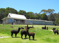 Lavers Hill House designed by sustainable architect Green Point Design. House in landscape on alpaca property.