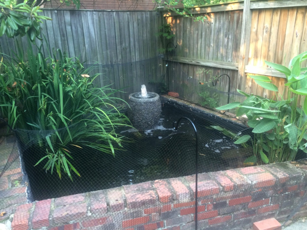 An old pond upgraded