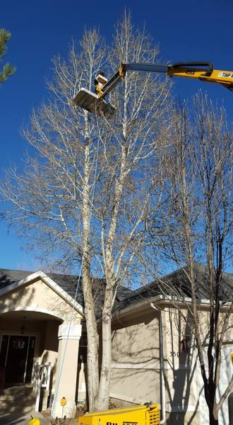 Tree removal with boom lift
