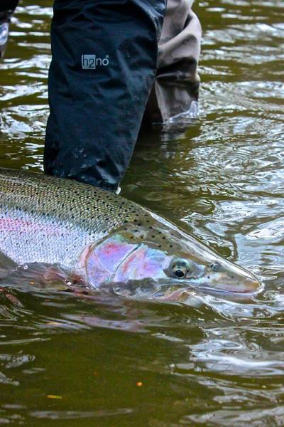 Medford Oregon Fly FIshing Shop, Fly Fishing Guide Service, Rogue River Fly Fishing Steelhead Southern Oregon Fly Fishing