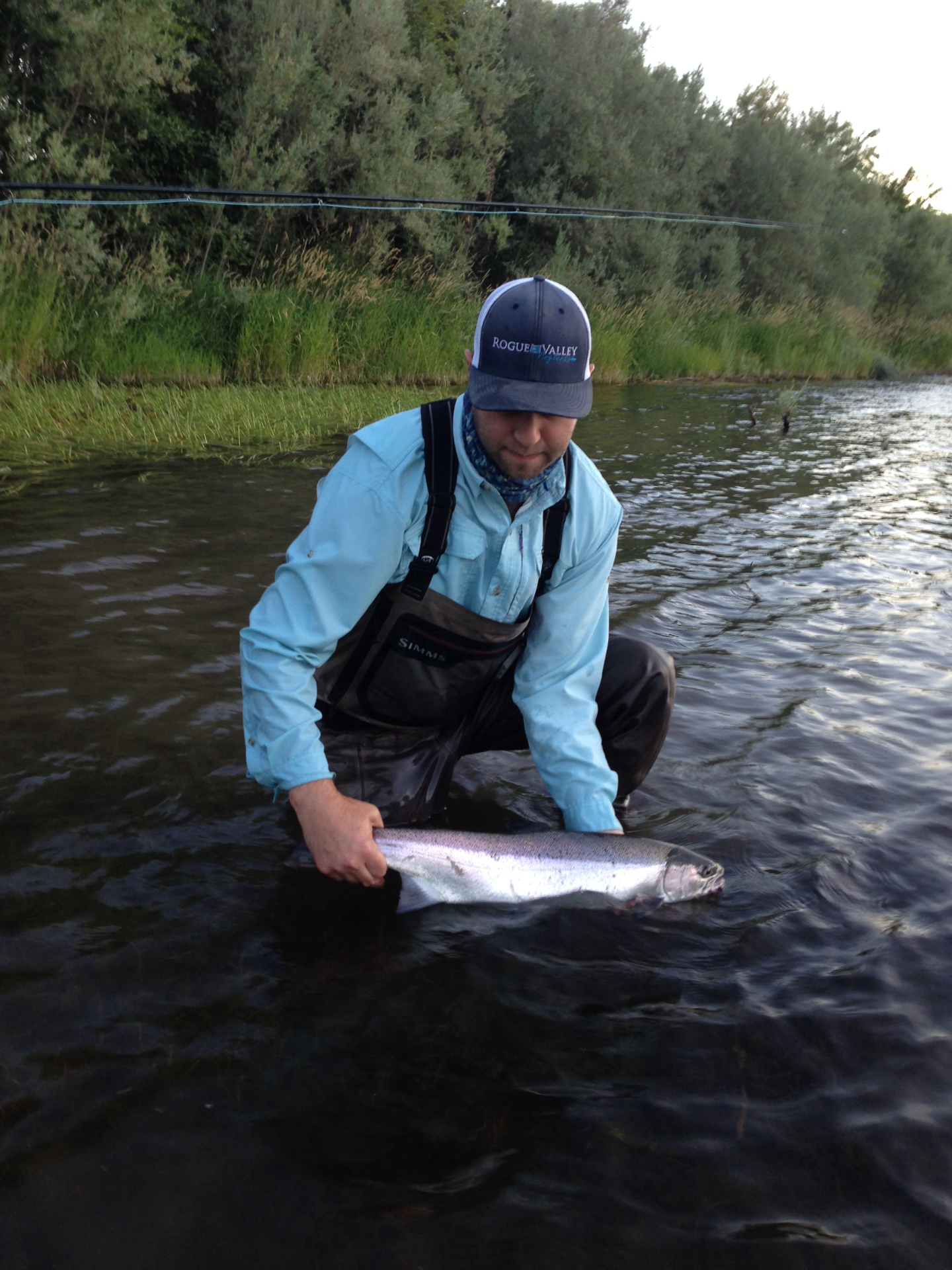 steelhead fly fishing, rogue river steelhead, Rogue River fishing report, medford oregon fly fishing shop