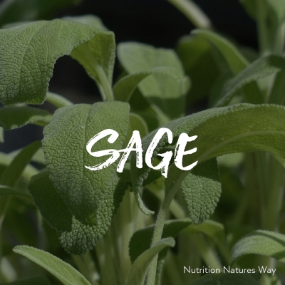 Herb of the month - Sage