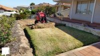 Dingo Lawn removal