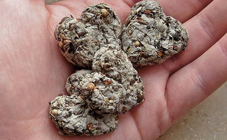 seed splatters
