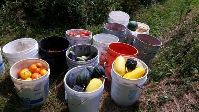 2015 first garden harvest