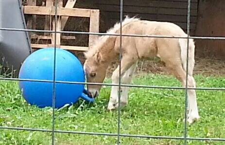 Baby Elmer and his ball