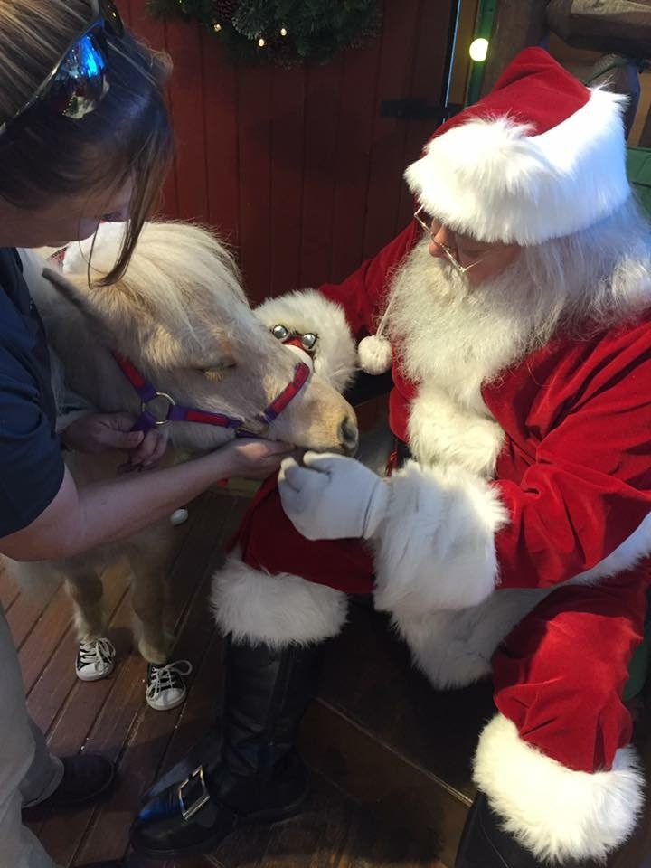 AWWW- Even Minis get to see Santa.