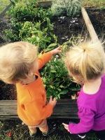 Organic Gardening Nature