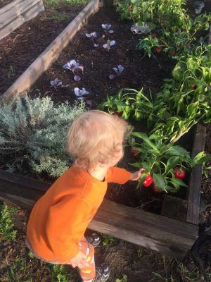 preschool, gardening, waldorf, nature, organic