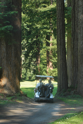 A Place To Play Secret Jewel Amongst Towering Redwoods