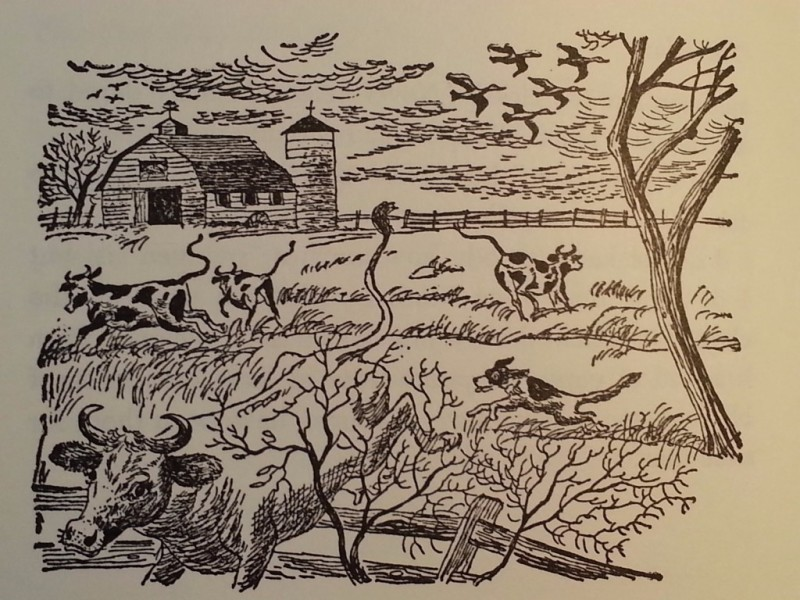 "From Chapter 4, ""A Flock of Ducks,"" illustrated by Paul Galdone"