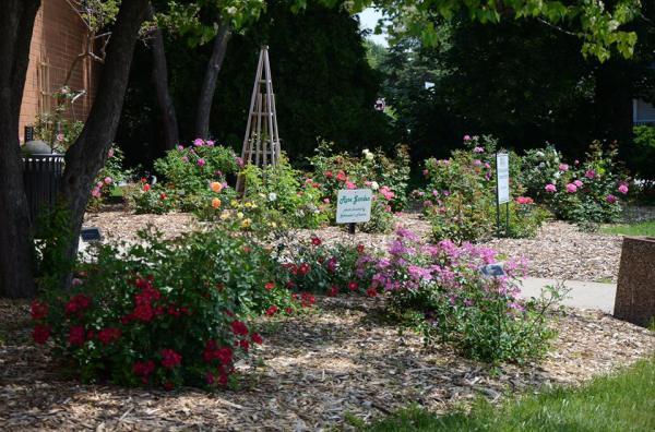 rose garden at UWEX