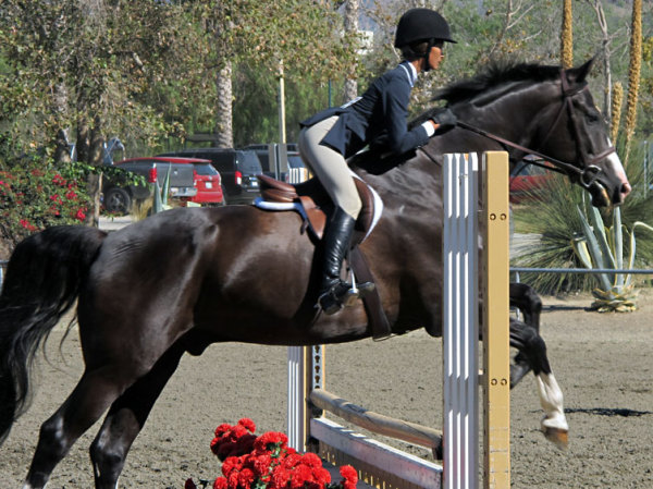 Breanna 2015 competiting in the 11 and under ring.