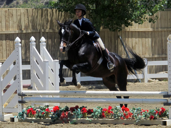 Breanna 2014 beginning her show jumping career in the crossrails and 2' ring.