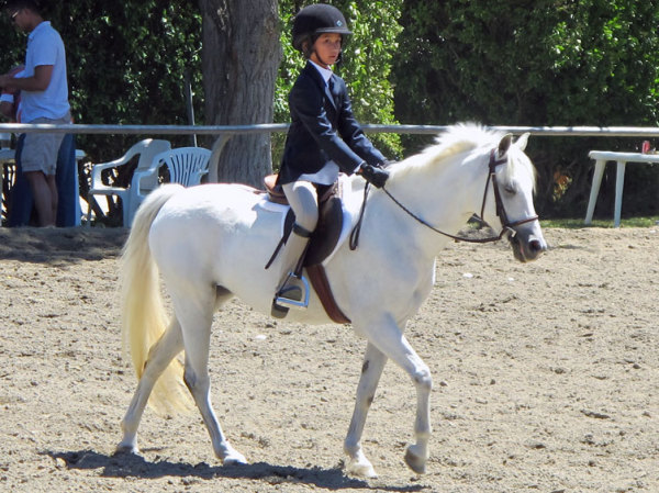 Breanna 2014 competiting in walk trot.
