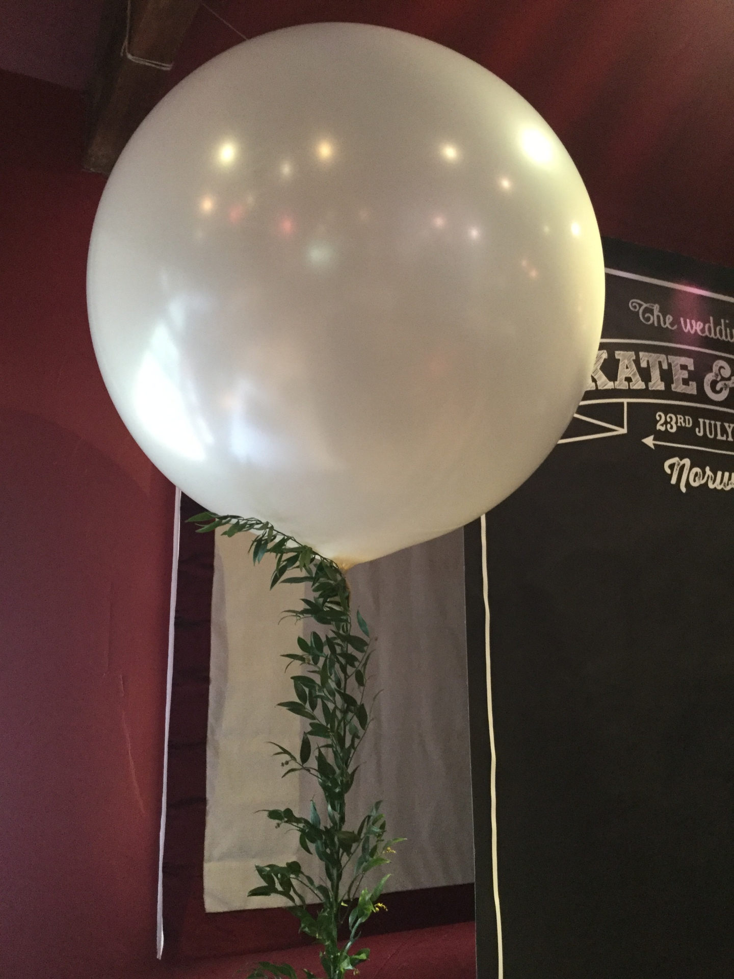 3ft balloon with live ruscus tail