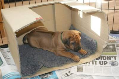 Puppy Nursery Visit/Walk