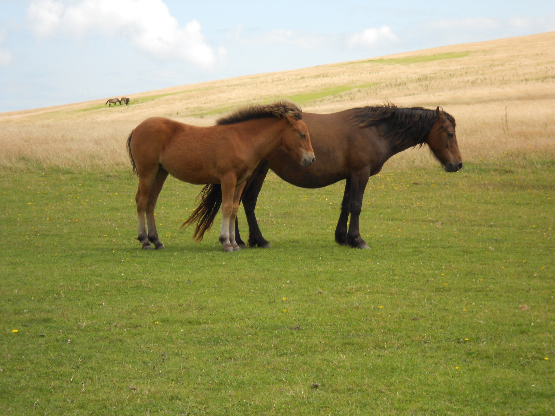 exmoor, ponies, somerset, dunster, beach, hut, salad, days