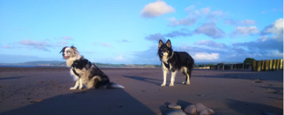 Dunster, beach, hut, salad days, beach hut, chalet, dunster beach, where's Maverick, blog, dogblog