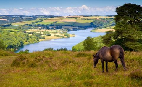 Dunster, beach, hut, salad, days, image, beach, hut, chalet, dunster, beach, Exmoor wimbleball lake, sw lakes trust, exmoor pony