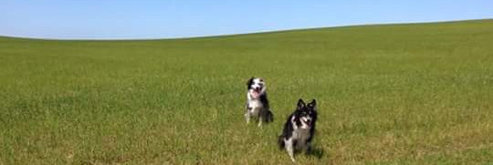 Dunster, beach, hut, salad days, beach hut, chalet, dunster beach, collies, field