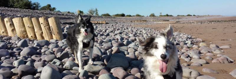 Dunster, beach, hut, salad days, beach hut, chalet, dunster beach, collies, dogs, beach