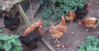 dunster, beach, salad, days, dunster beach hut, freerange chickens