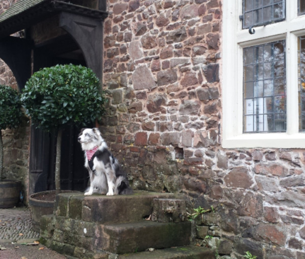 Maverick outside National Trust Shop in Dunster