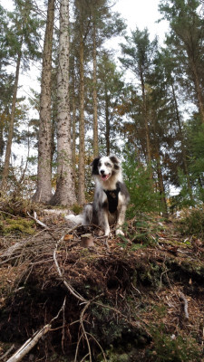 Me looking cool in the woods!