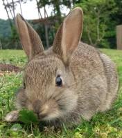 Dunster, beach, hut, salad days, beach hut, chalet, dunster beach, bunny, rabbit