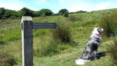Dunster, beach, hut, salad days, beach hut, chalet, dunster beach, where's Maverick, blog, dogblog