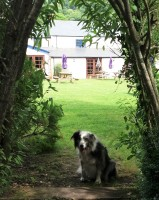 dunster, beach, salad, days, dunster beach hut, dogs welcome, dog friendly