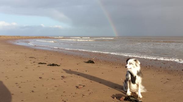 salad days, dunster, dunster beach, where's maverick, blog, exmoor, devon, somerset, beach hut